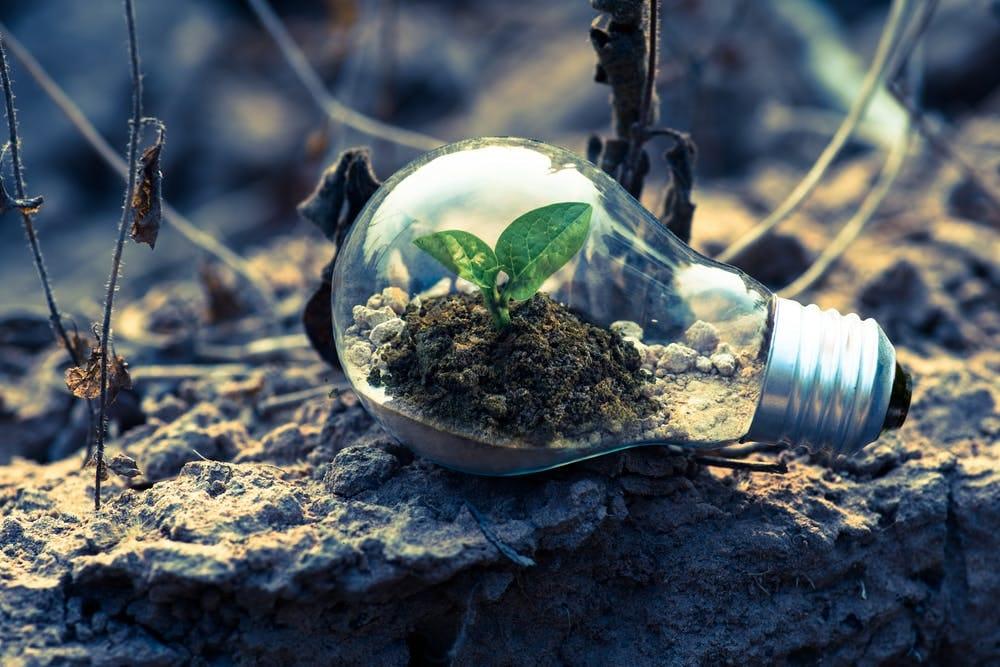 Le 6 startup italiane nascenti che fanno della sostenibilità il loro personal branding.