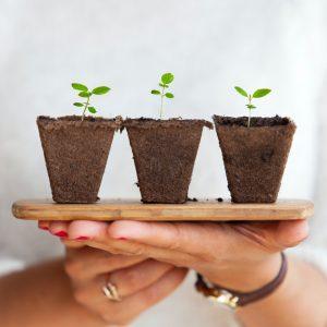 start-up & sustainability
